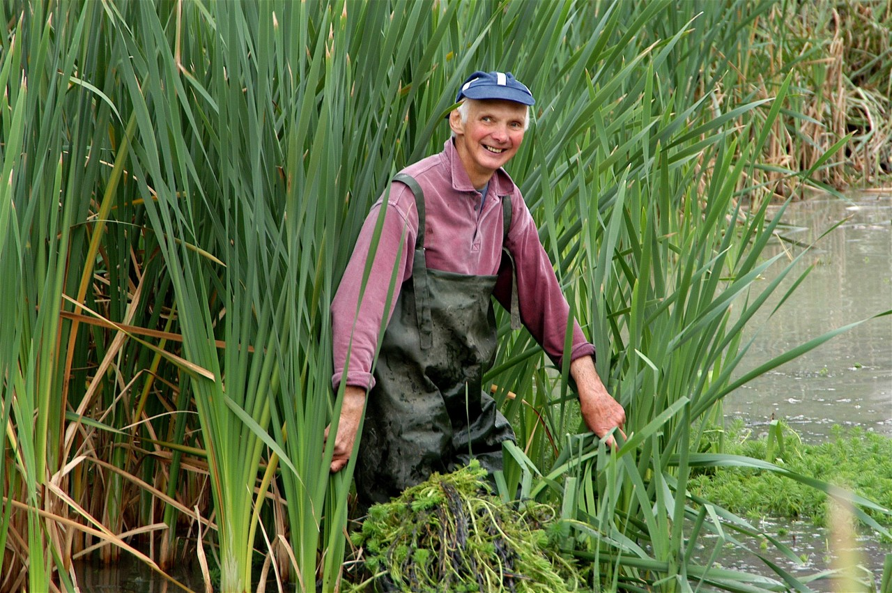 Volunteer in the reeds